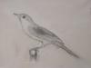 toth-fuglen
